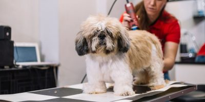 Find out how professional groomers pick their dog hair clippers.