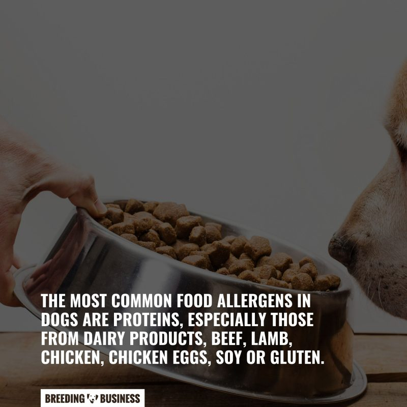 allergens in dog food