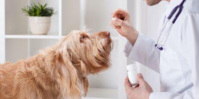 Dog OTC Pain Meds – Must-Have List, Guide & FAQs