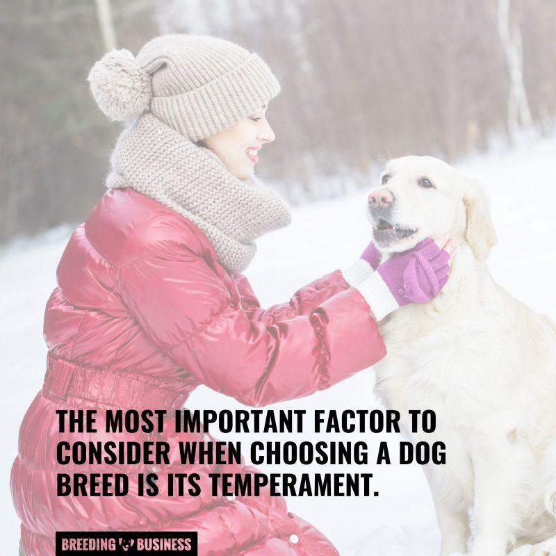 considering factors before choosing a breed