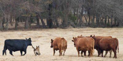 Top 10 Herding Dog Breeds w/ FAQ