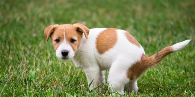 Find out some home remedies for dog constipation.