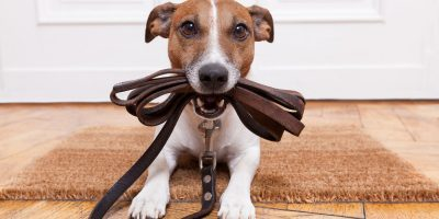Leather Dog Leads – Buying Guide, Reviews & FAQs