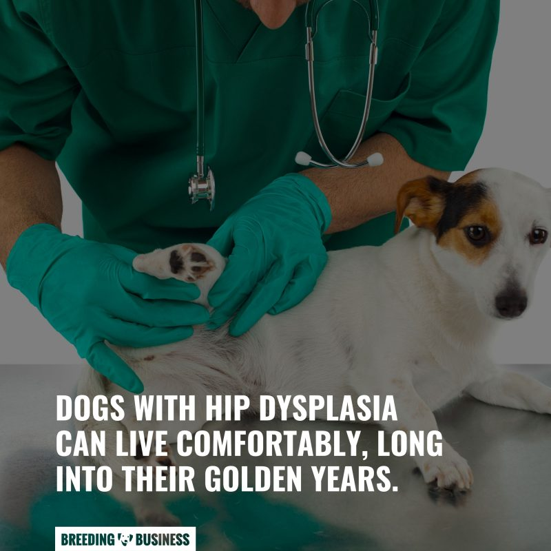 dogs with hip dysplasia lifespan