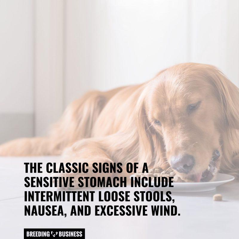 senstivie stomach signs