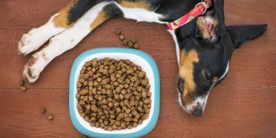 Find out what makes dog food hypoallergenic.