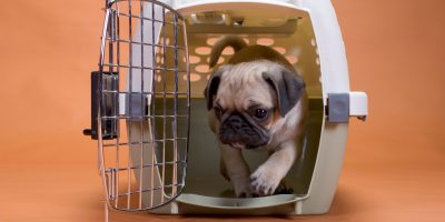 Find out the benefits of dog shipping services!