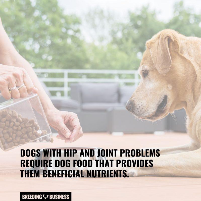 dogs need good dog food