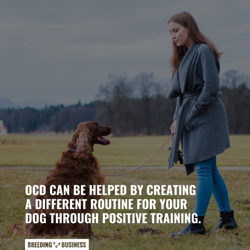 dogs with ocd needed help