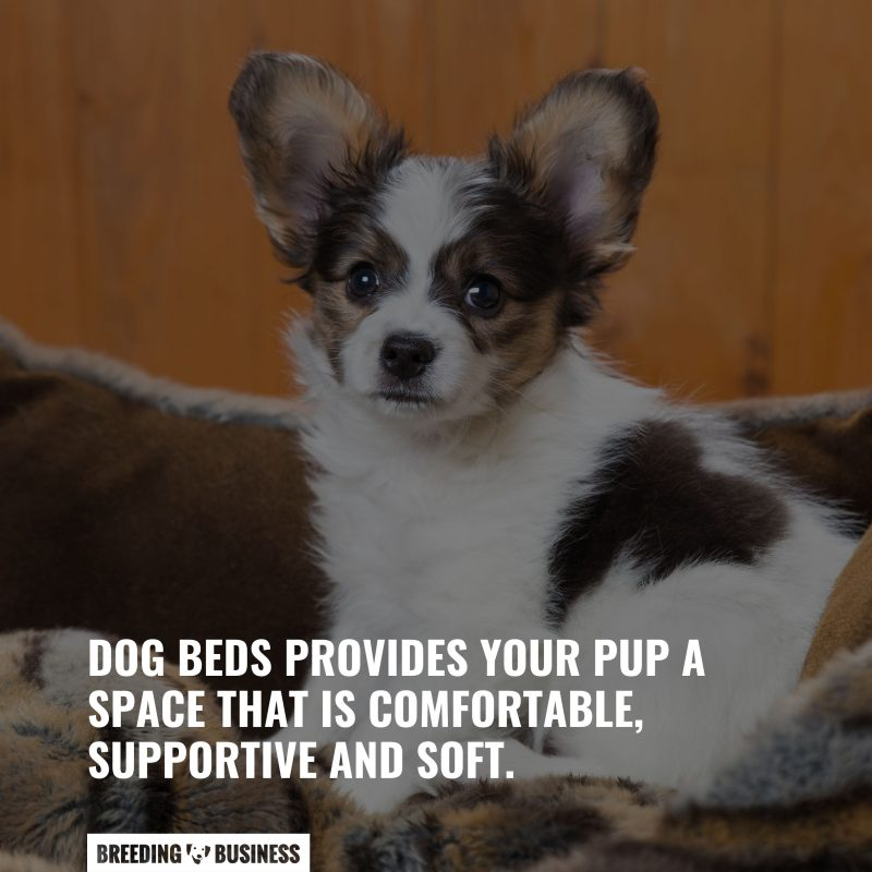 importance of puppy beds