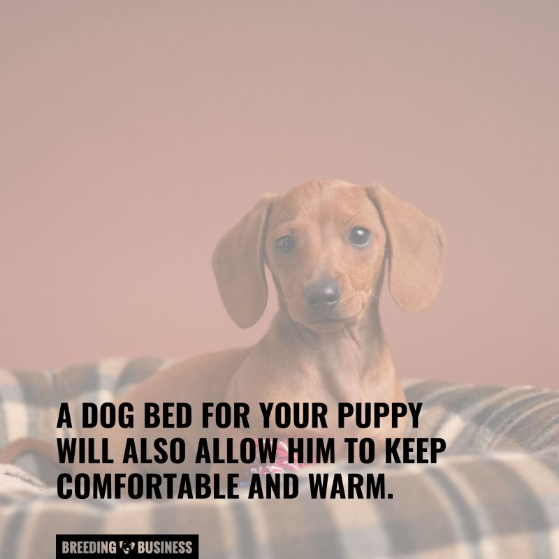 significance of puppy beds