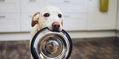 FInd out why senior dogs need different food and which are the best ones for them!