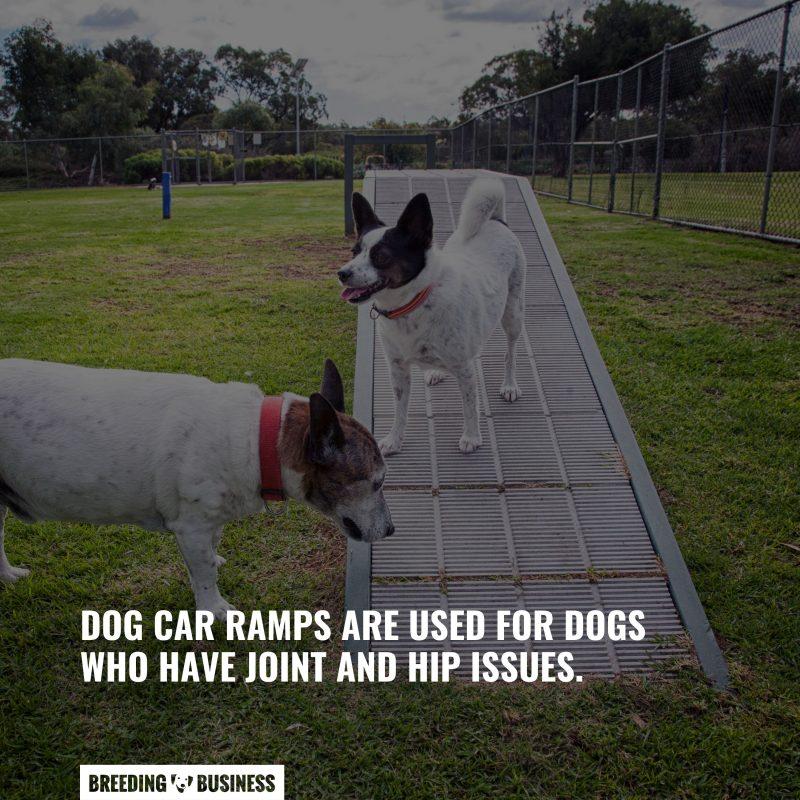 dog car ramp significance